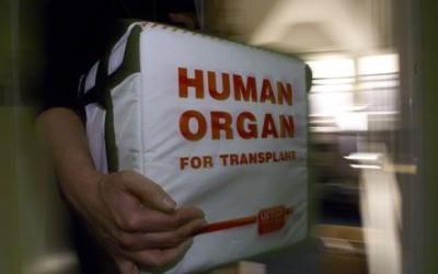 La enfermera de transplantes por Cecilia Tutera